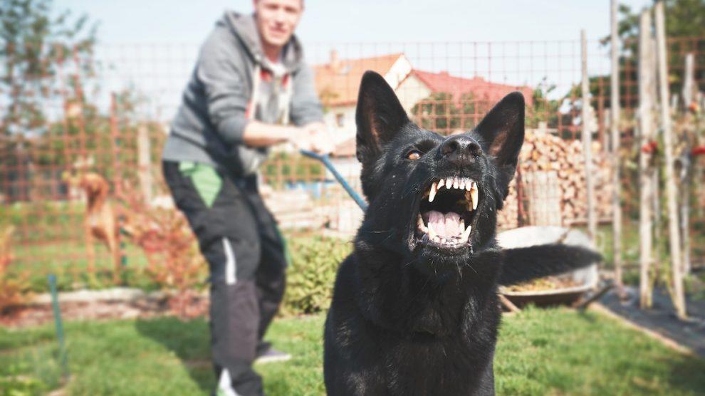 Schadensersatz vom Hund gebissen